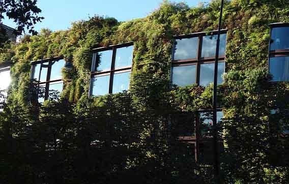 Un mur végétal à Paris